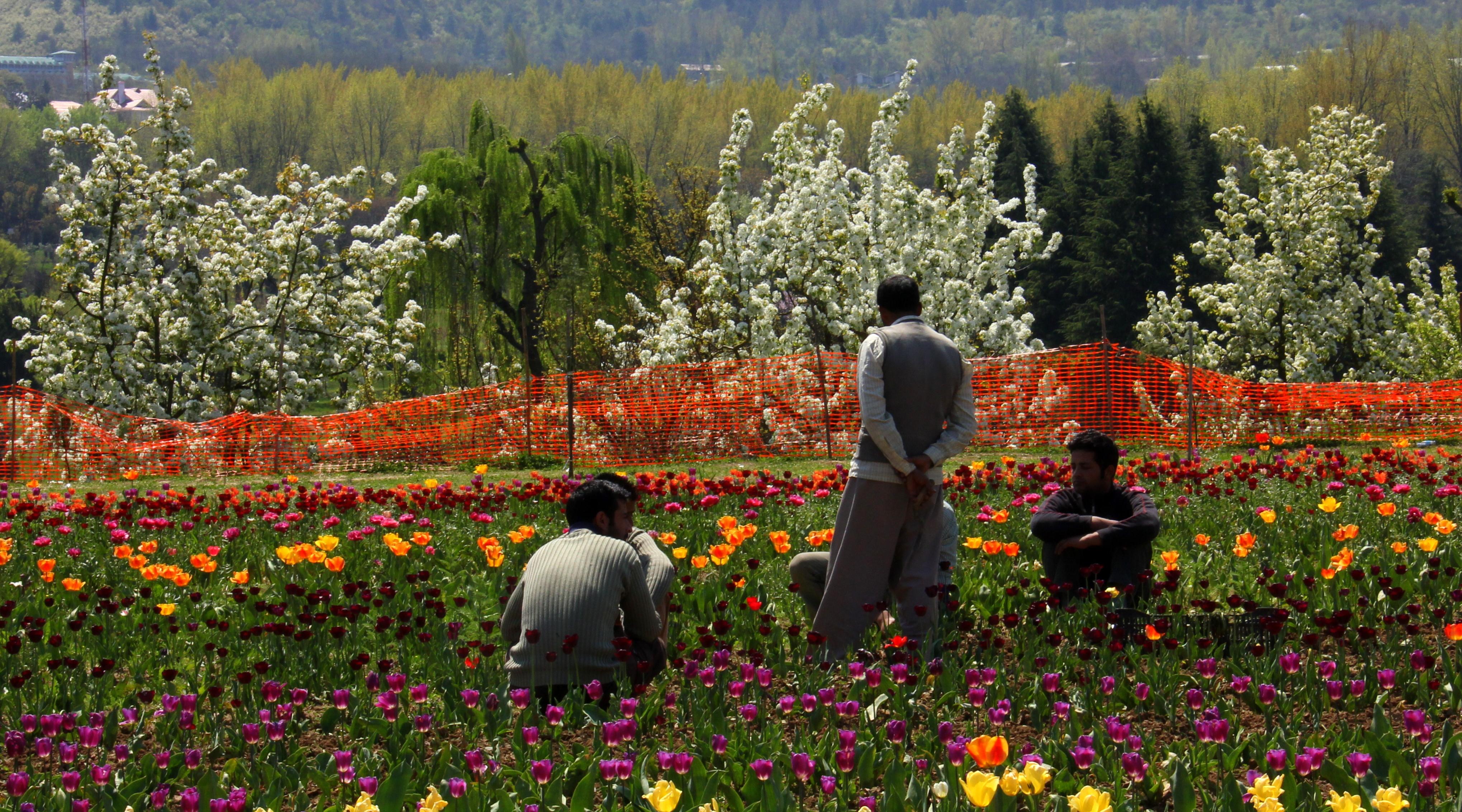 gardeners resting at srinagar tulip garden