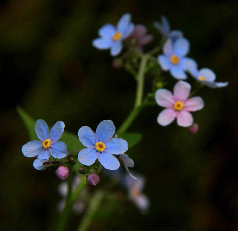The flowers and plants found at the valley of flowers have high pharmaceutical and medicinal value