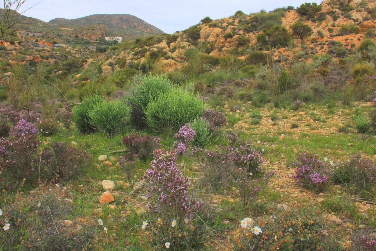spring flowers of Spain