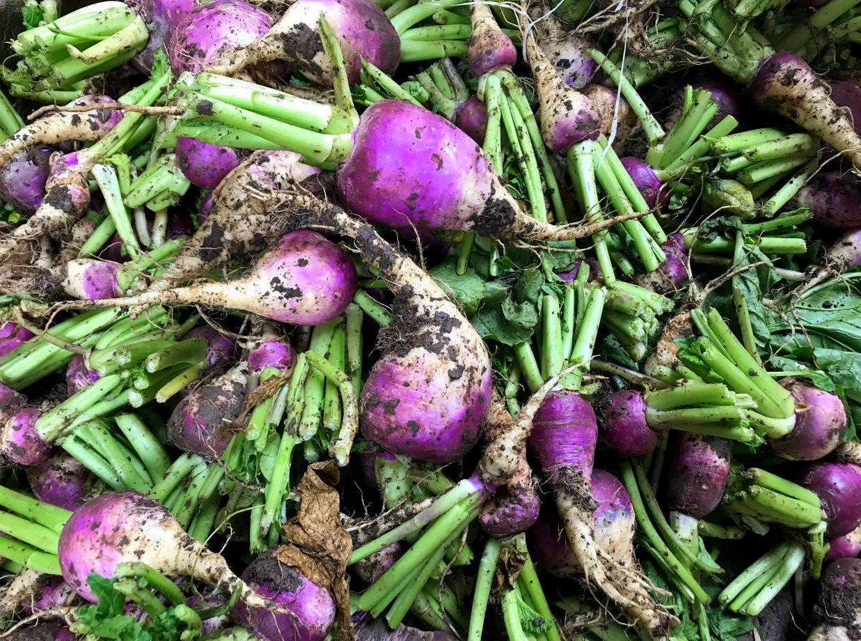 Winter vegetables in Cairo
