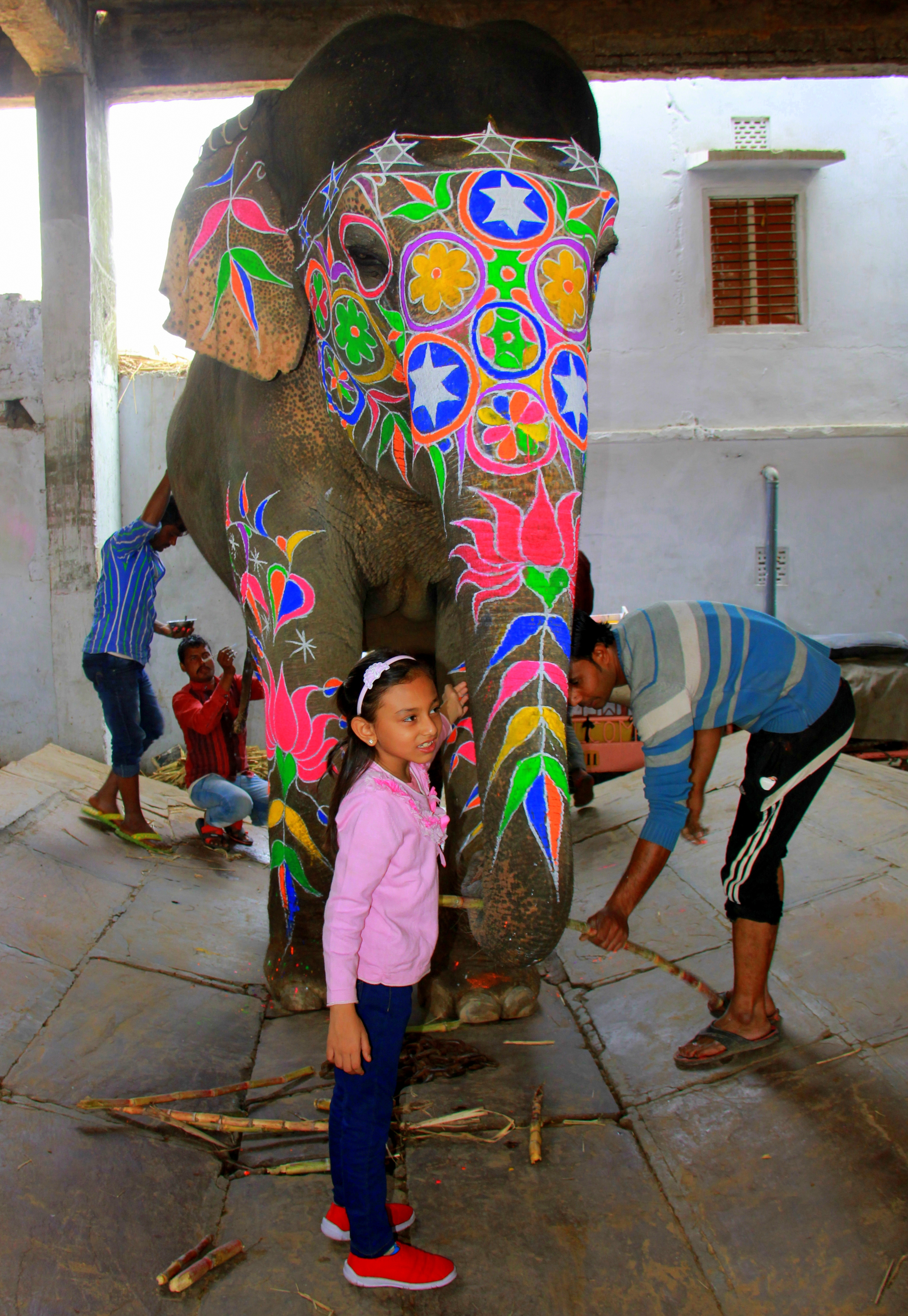 elephant camp in jaipur