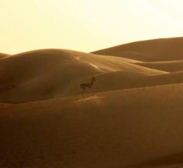 Walk on the wild side in Dubai