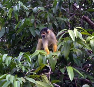 Jungle times at Rurrenabaque