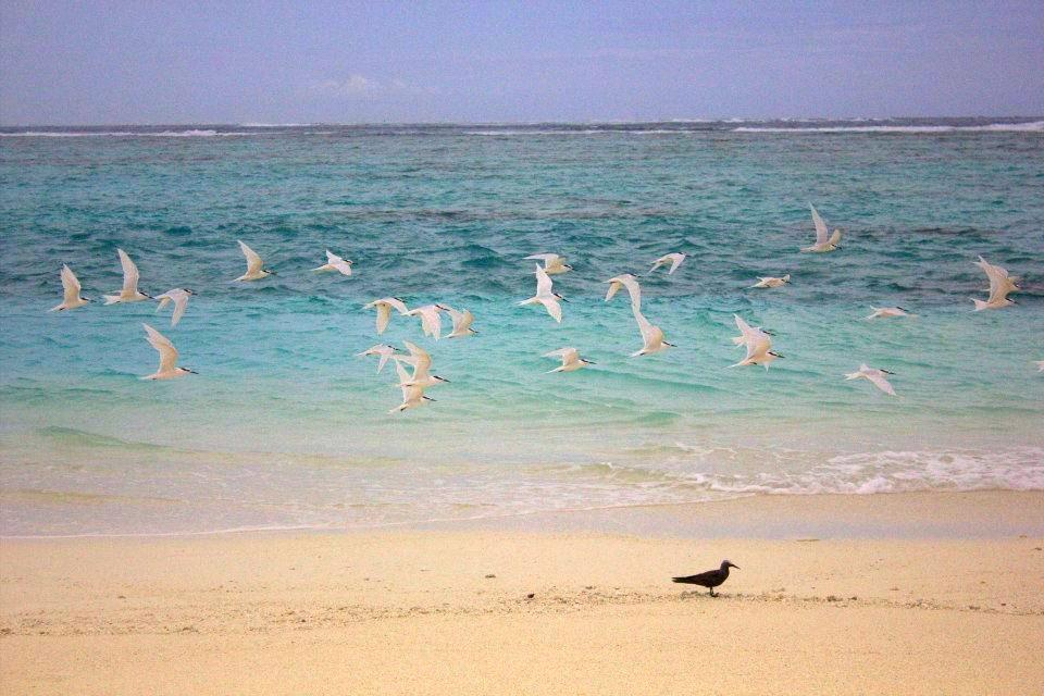 #Maldives #travelblog #maverickbird