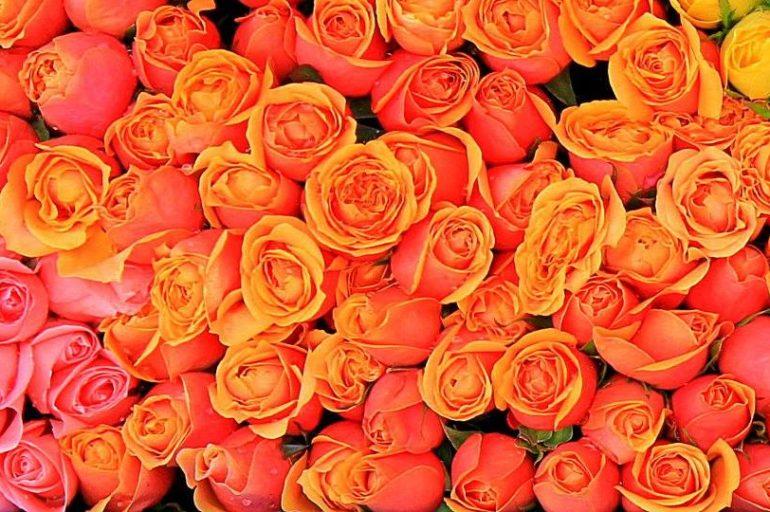 Flowers of Da Lat