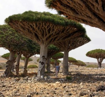 Money Matters Socotra