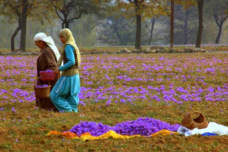 The saffron town of Pampore