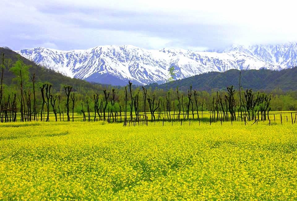 #travelbloggerindia #kashmirtourism #daksum #offbeatplacesinkashmir #travelblogindia #travelblogkashmir