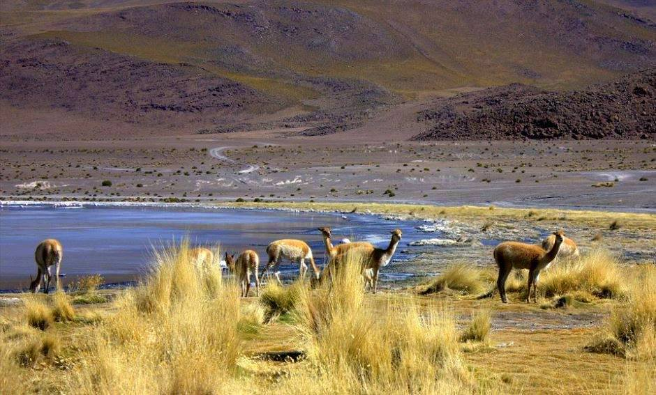 #travelbloggerindia #boliviatourism #southamerica #salar