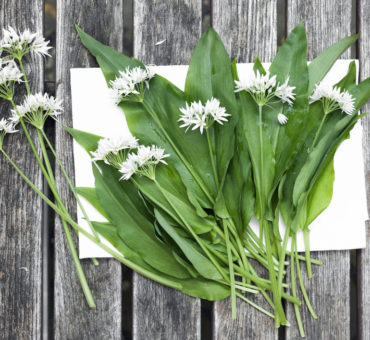 The whacky bear's garlic