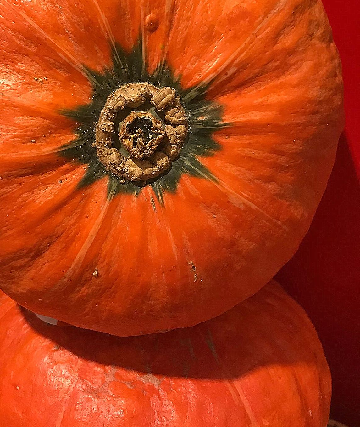 the autumn fruit of pumpkin