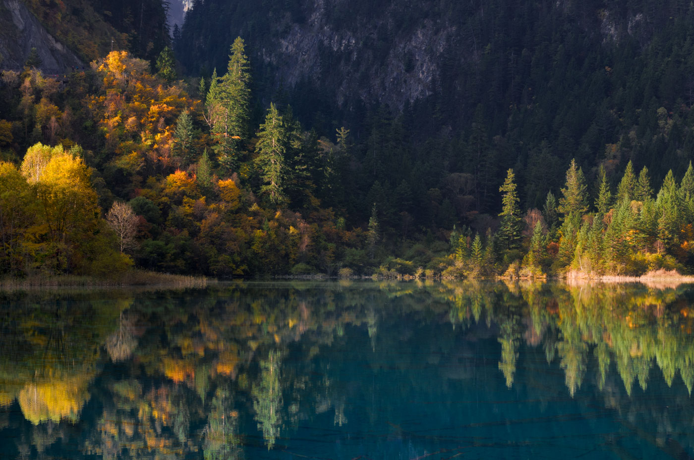 The fall foliage makes a beautiful photobook