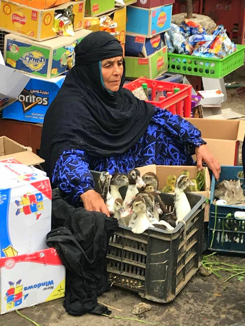 Lady selling ducks at local market in Cairo