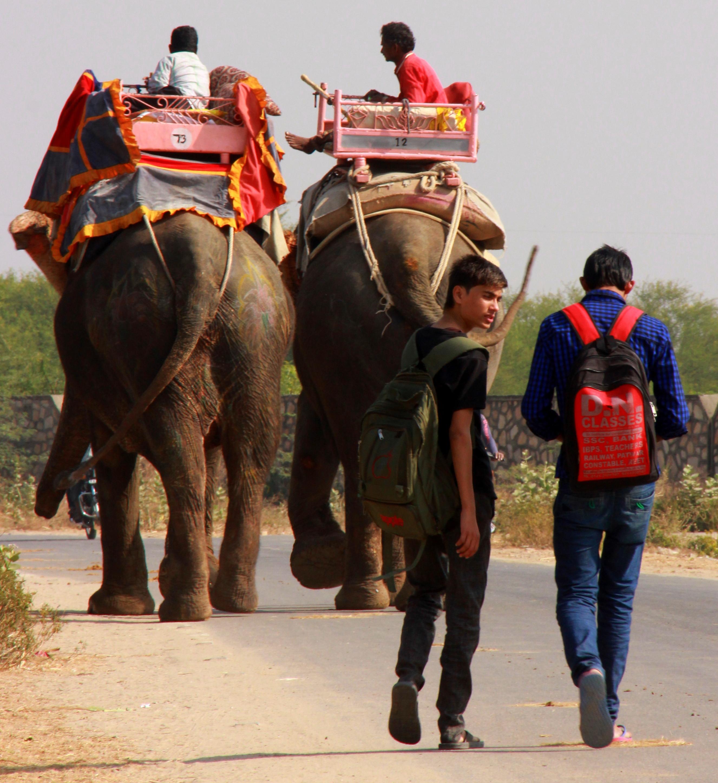 elephant safari in dera amer