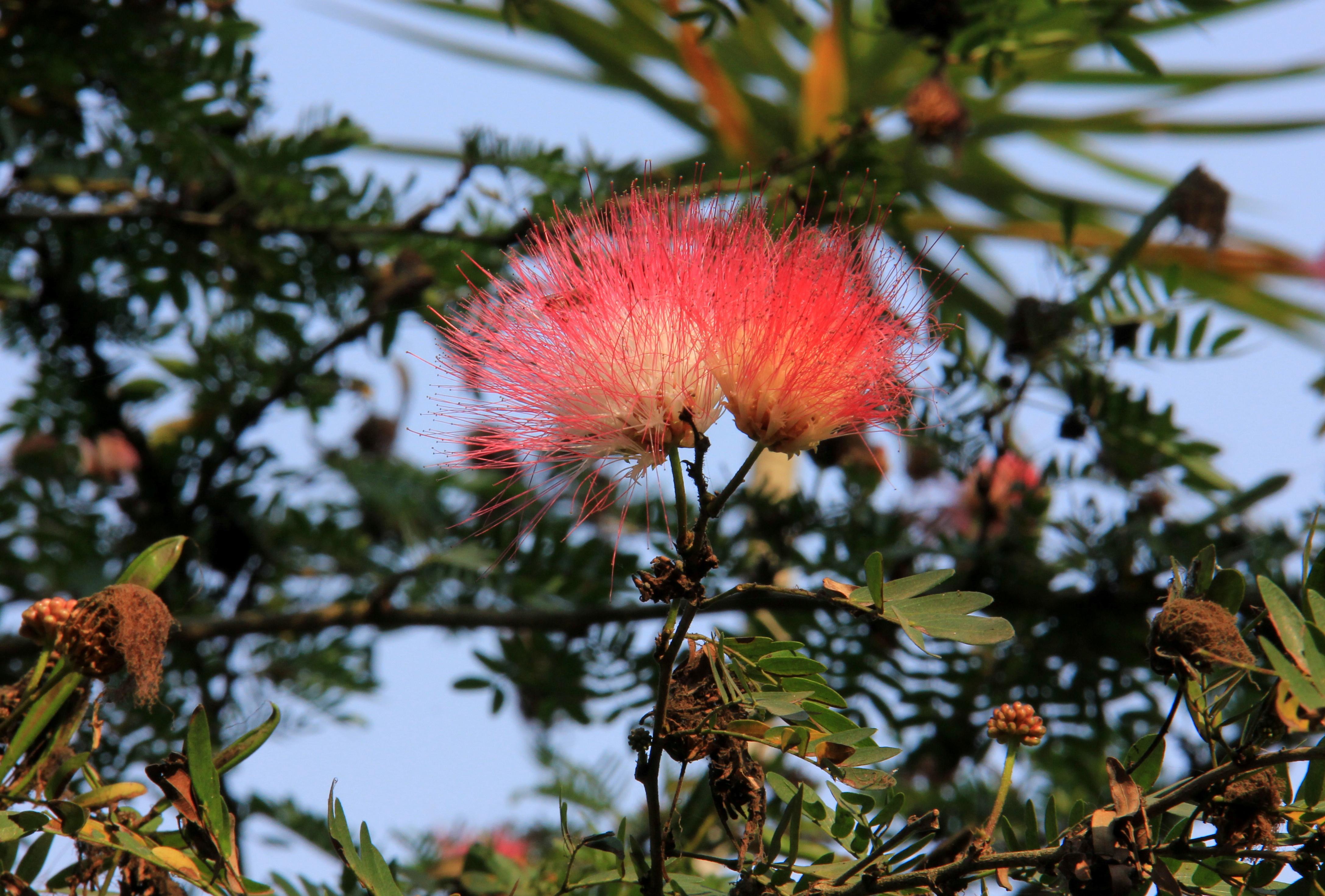 Wild flowers growing in rural Bengal