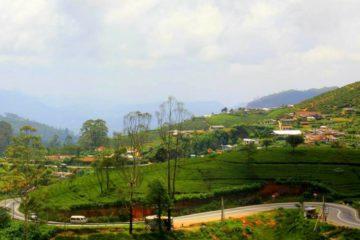 tea gardens of darjeeling