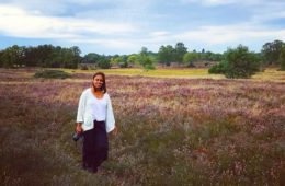 Heather blooming in luneburger heide