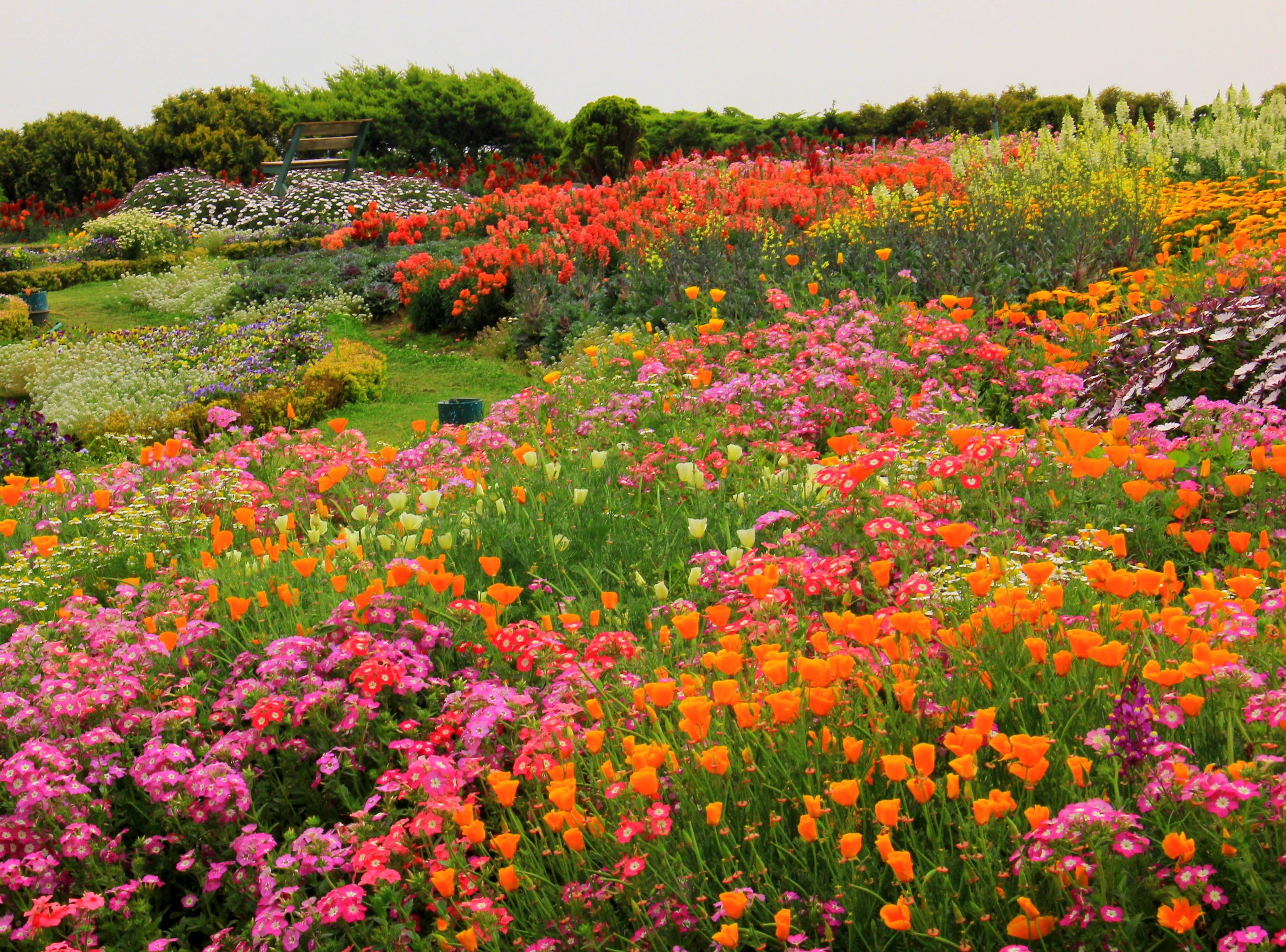the flower garden at doi inthanon summit