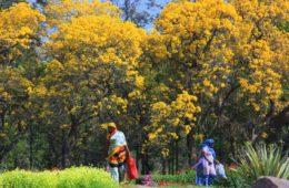 delhi parks in spring