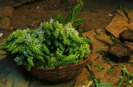 fiddlehead ferns for sale at darjeeling local market