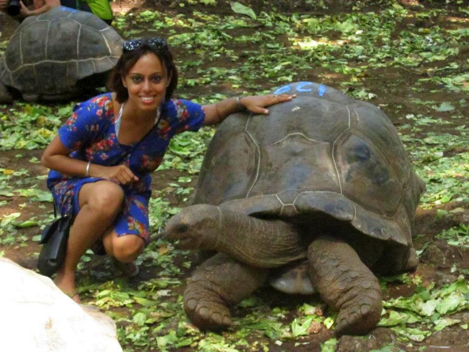 giant tortoises at prison island