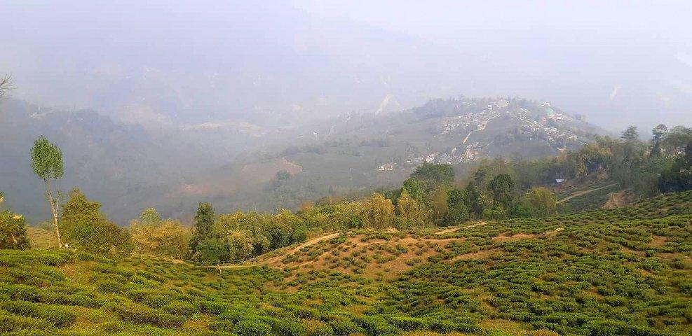 tea gardens en route to okhrey