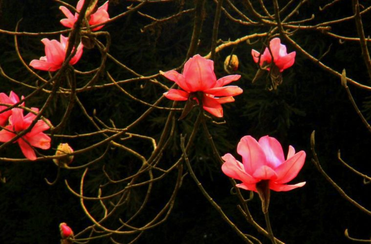 sikkim spring in okhrey