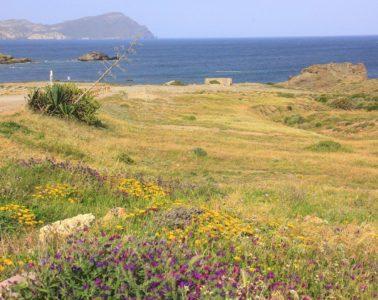 flower fields on the way to almeria