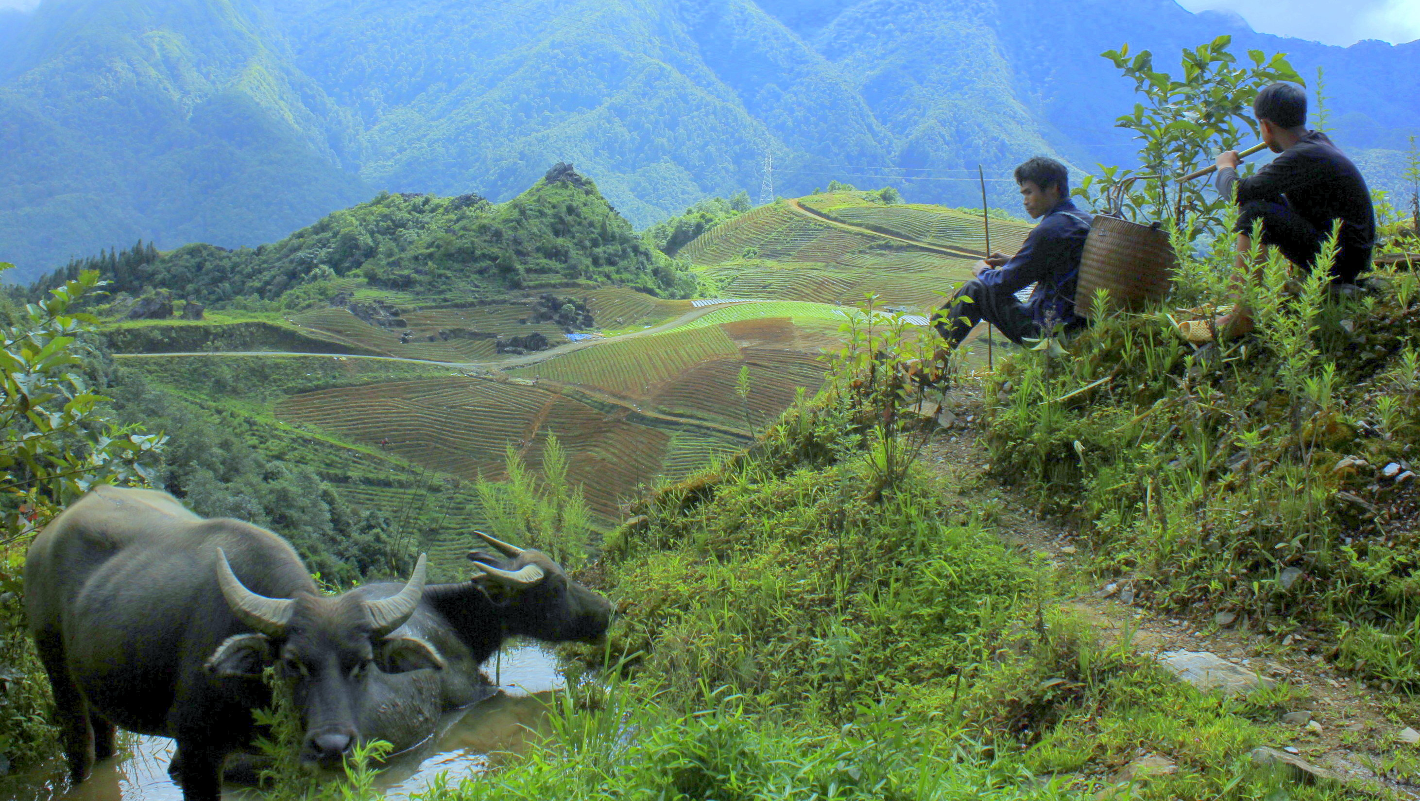 sa pa landscape