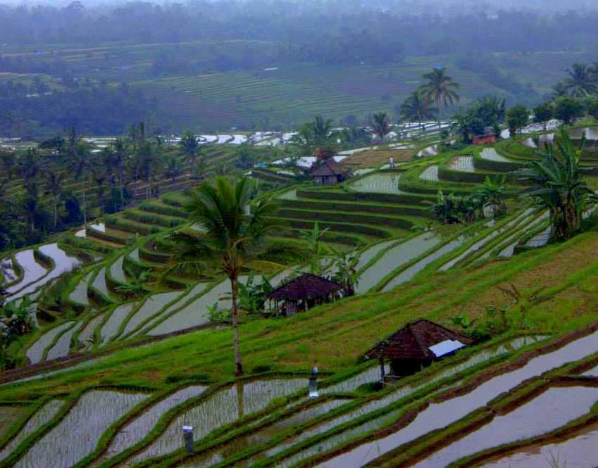Jatiluwih rice fields of bali