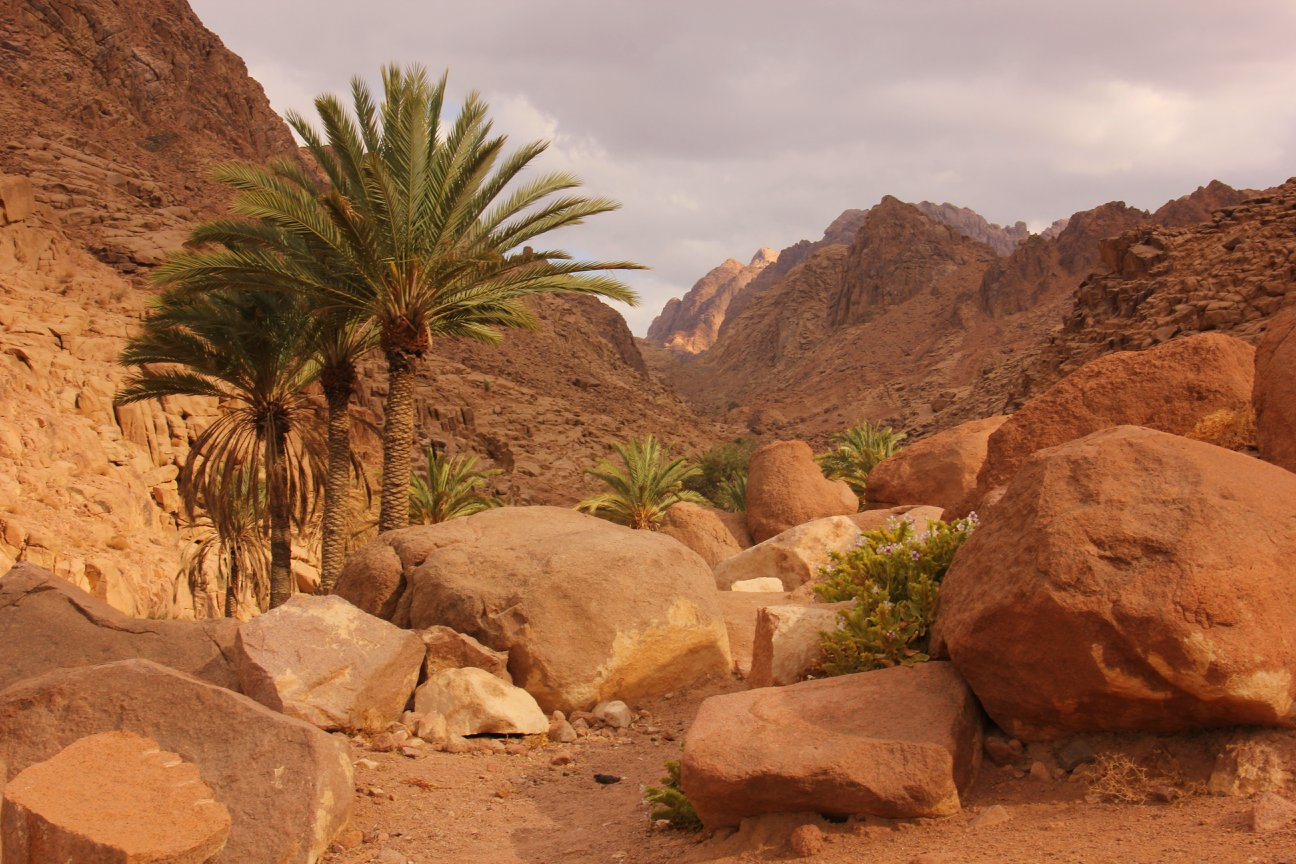 one of the A Bedouin gardens in St. Katherine