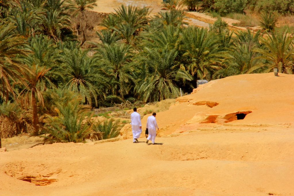 Siwa oasis men walking into the palm grove