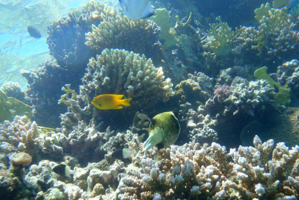 The astonishing underwater beauty of Marsa Alam