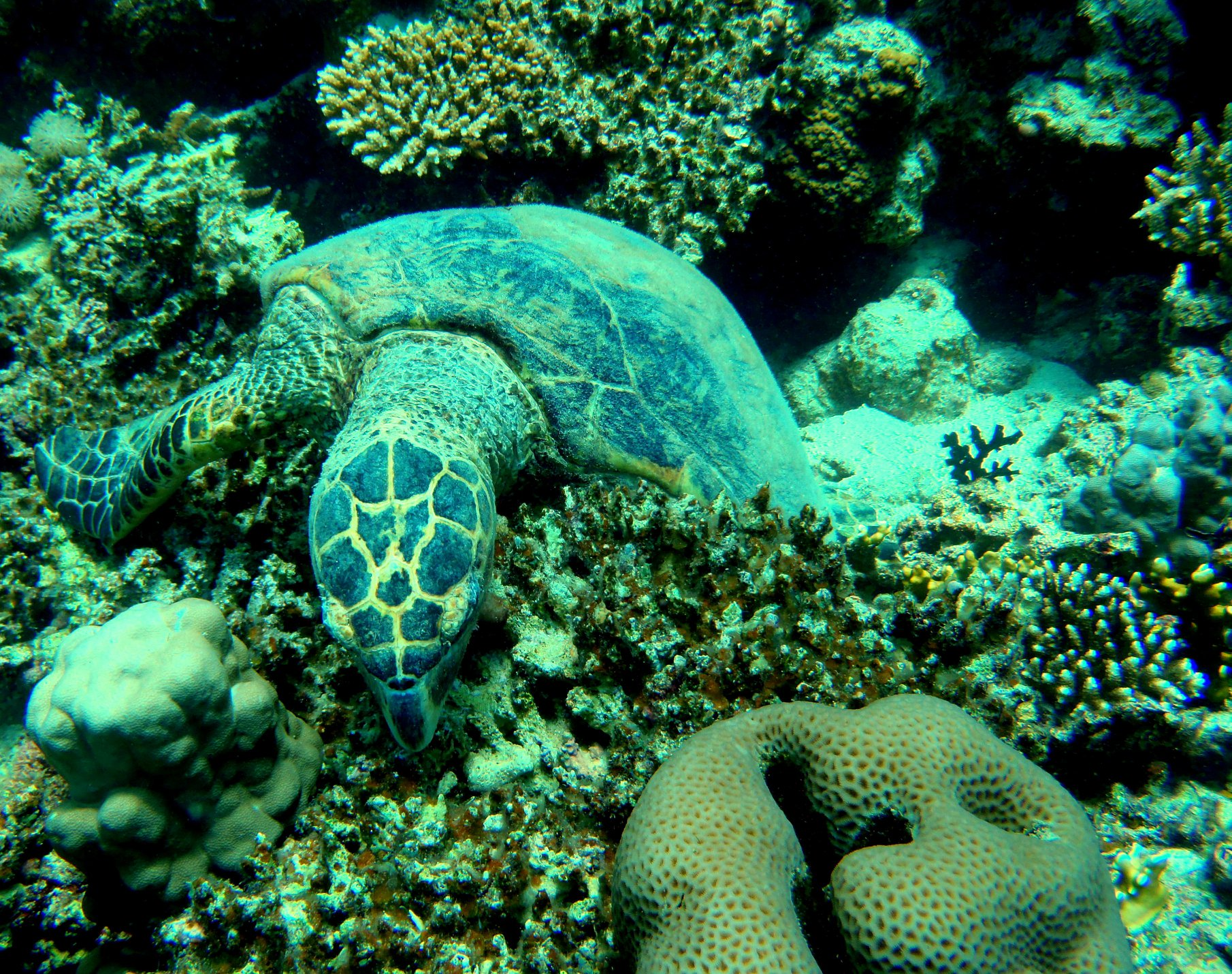 marine life near marsa alam