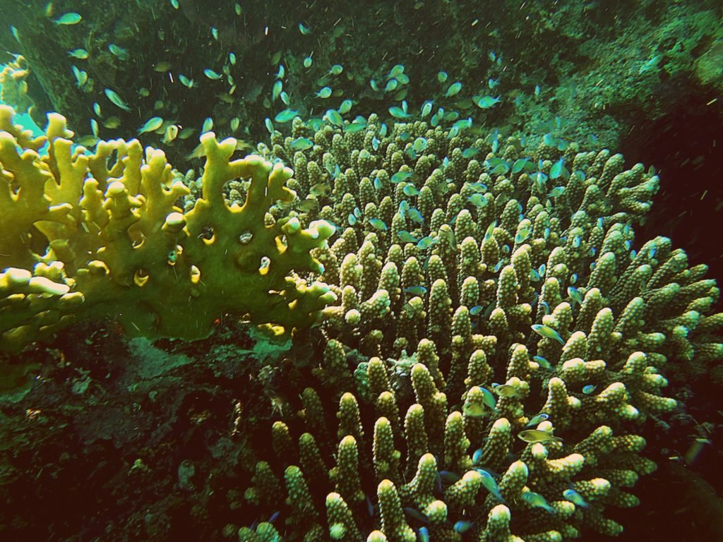 corals at red sea in marsa alam
