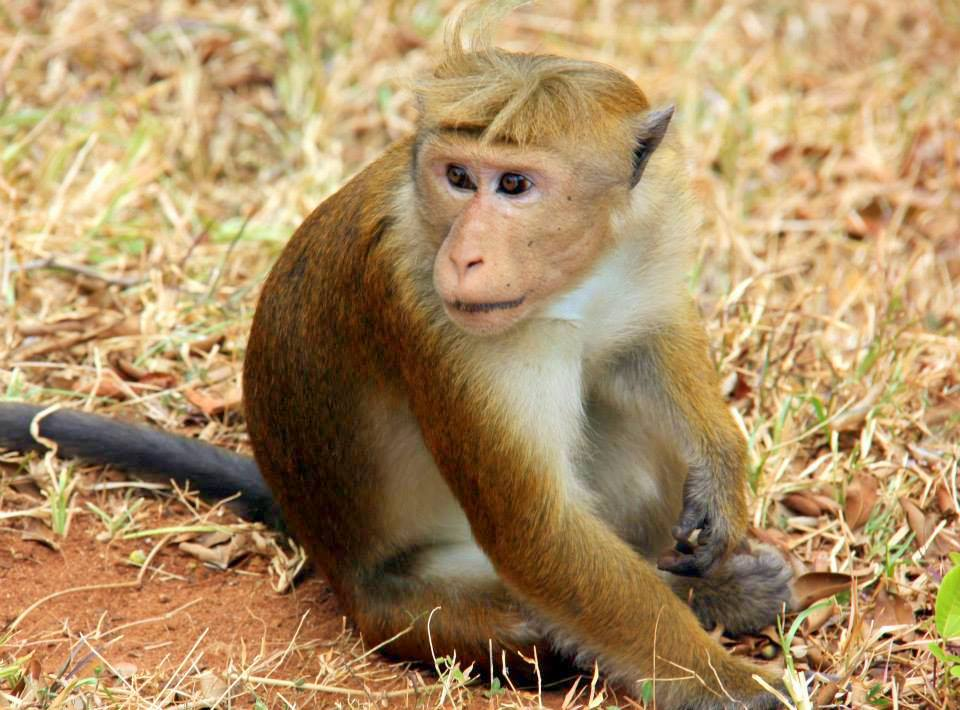 Keep an eye on the cheeky monkeys and wild bee hives at the Lion Rock