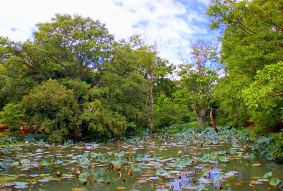 Lily pad filled moats of Sigiriya