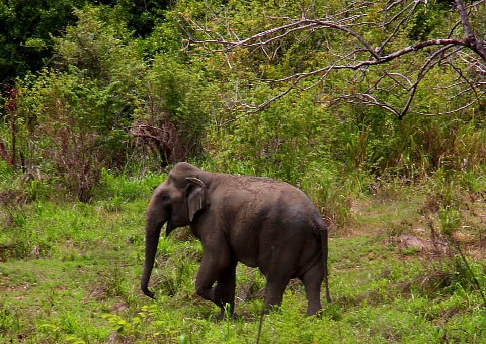 Wildlife spotting in Sri Lanka