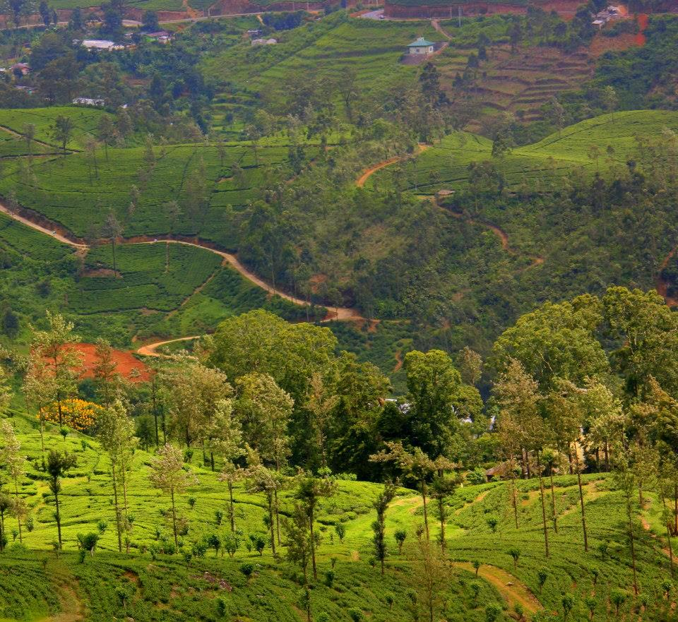 Flowers of the Hill Country in Nuwara Eliya