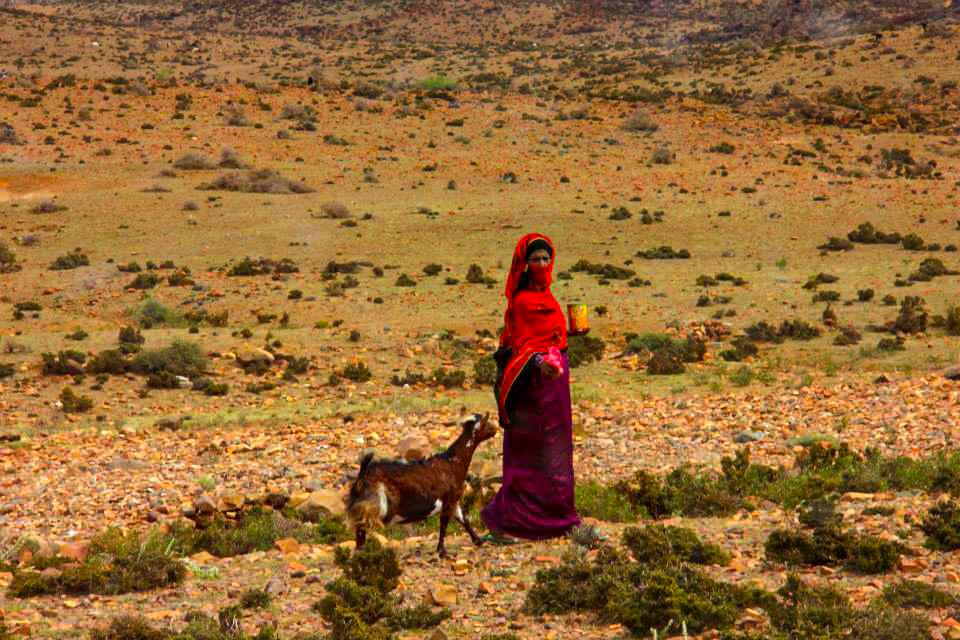 moumi plateau bedouin