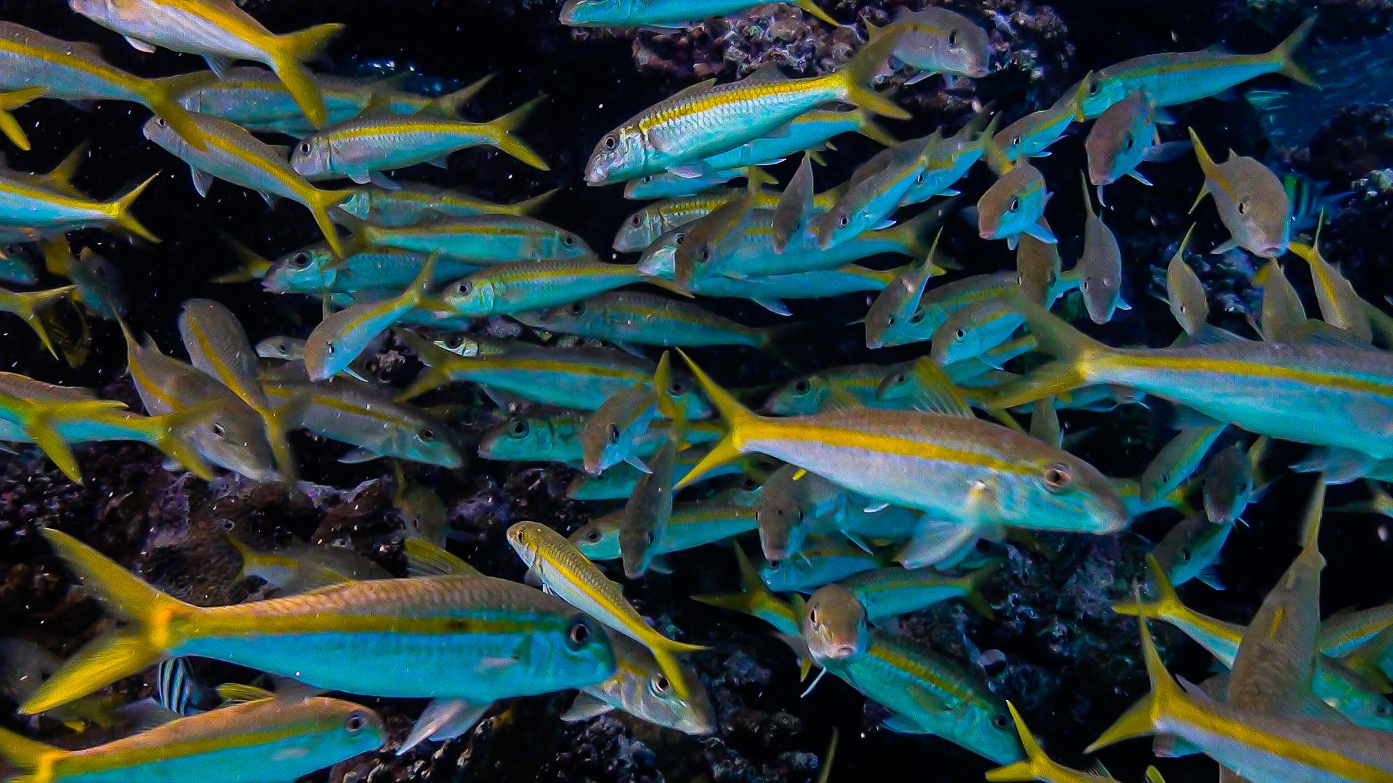 underwater world of marsa alam