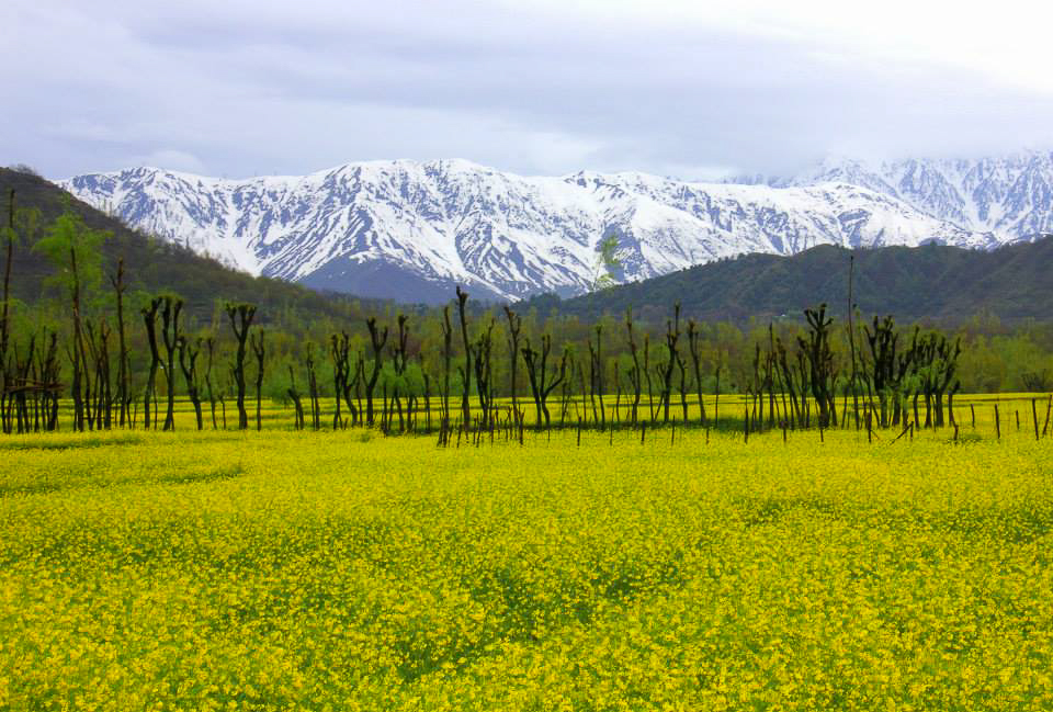 Kokkernag in Kashmir on a spring day